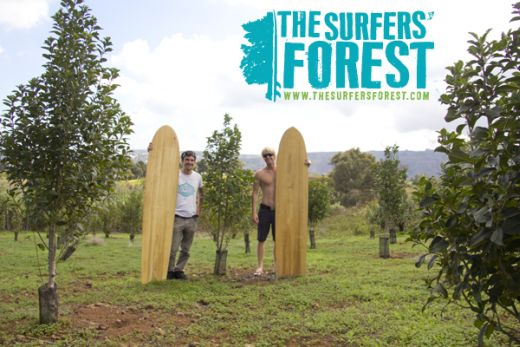 Bild: Surfers' Forest