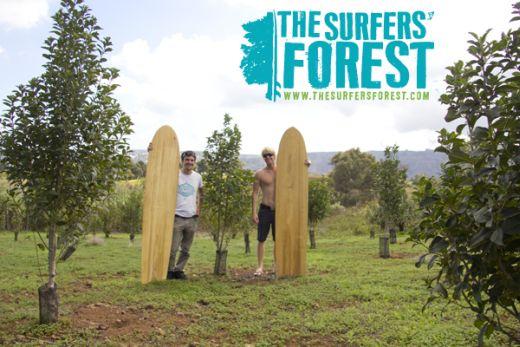 Bild: Surfers' Forest